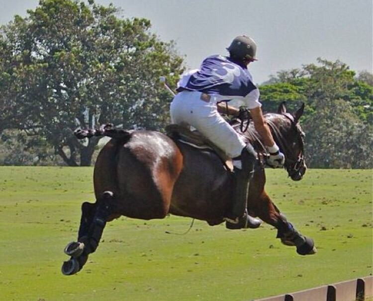 Andre playing polo