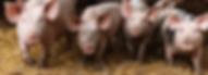 viande a la ferme