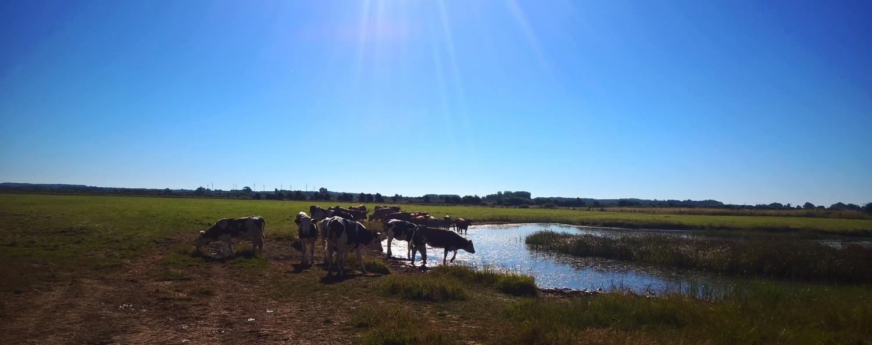 Les bas champs du Marquenterre