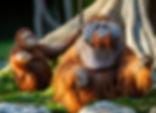 Dublin Zoo Parnership With 2GoCup