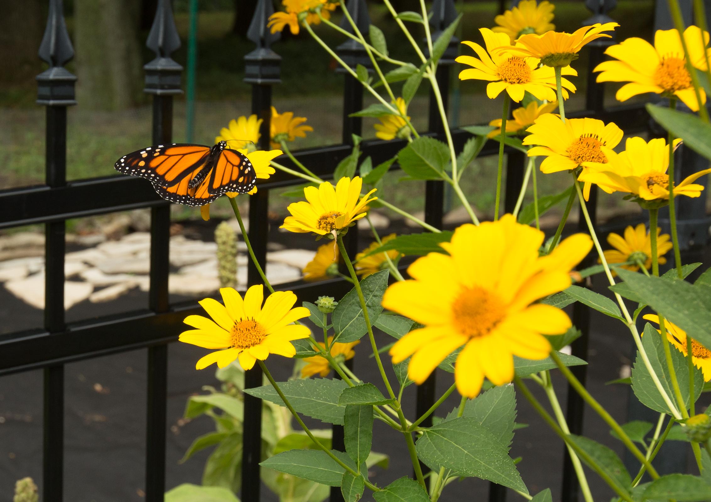 ButterflyB26A2614