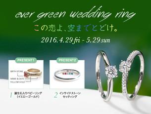 ever green wedding ring「この恋よ、空までとどけ。」フェア
