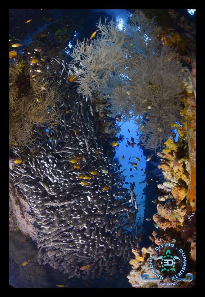 Pier Scuba Diving Dauin