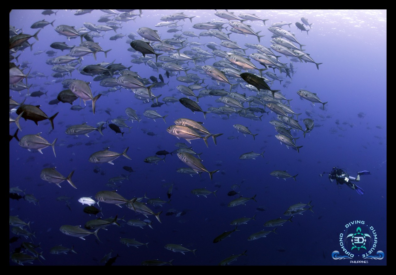 Scuba, Diving, Underwater, Photograp