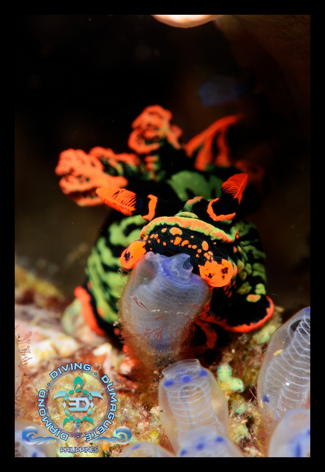 Basac, Zamboanguita, scuba diving