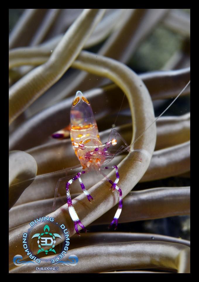 Scuba Diving, Underwater, Photograph