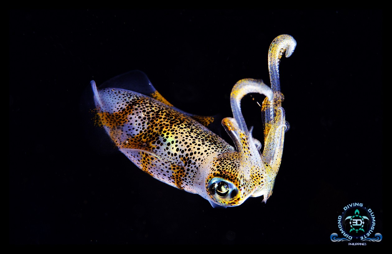 Scuba Diving Underwater Photography