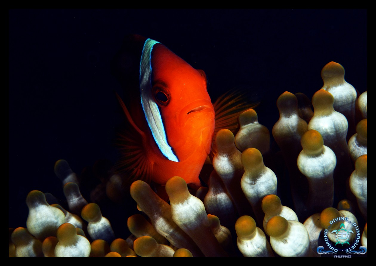 House Reef 3D Diving