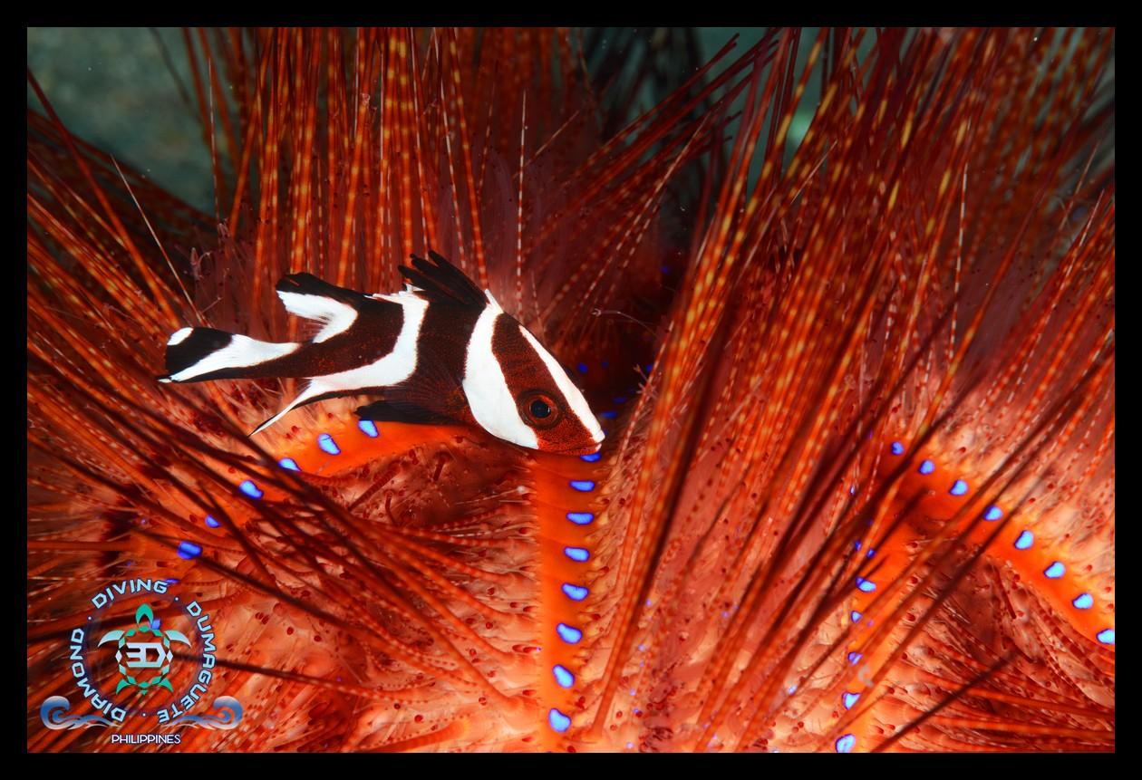 Scuba Diving Underwater Photography