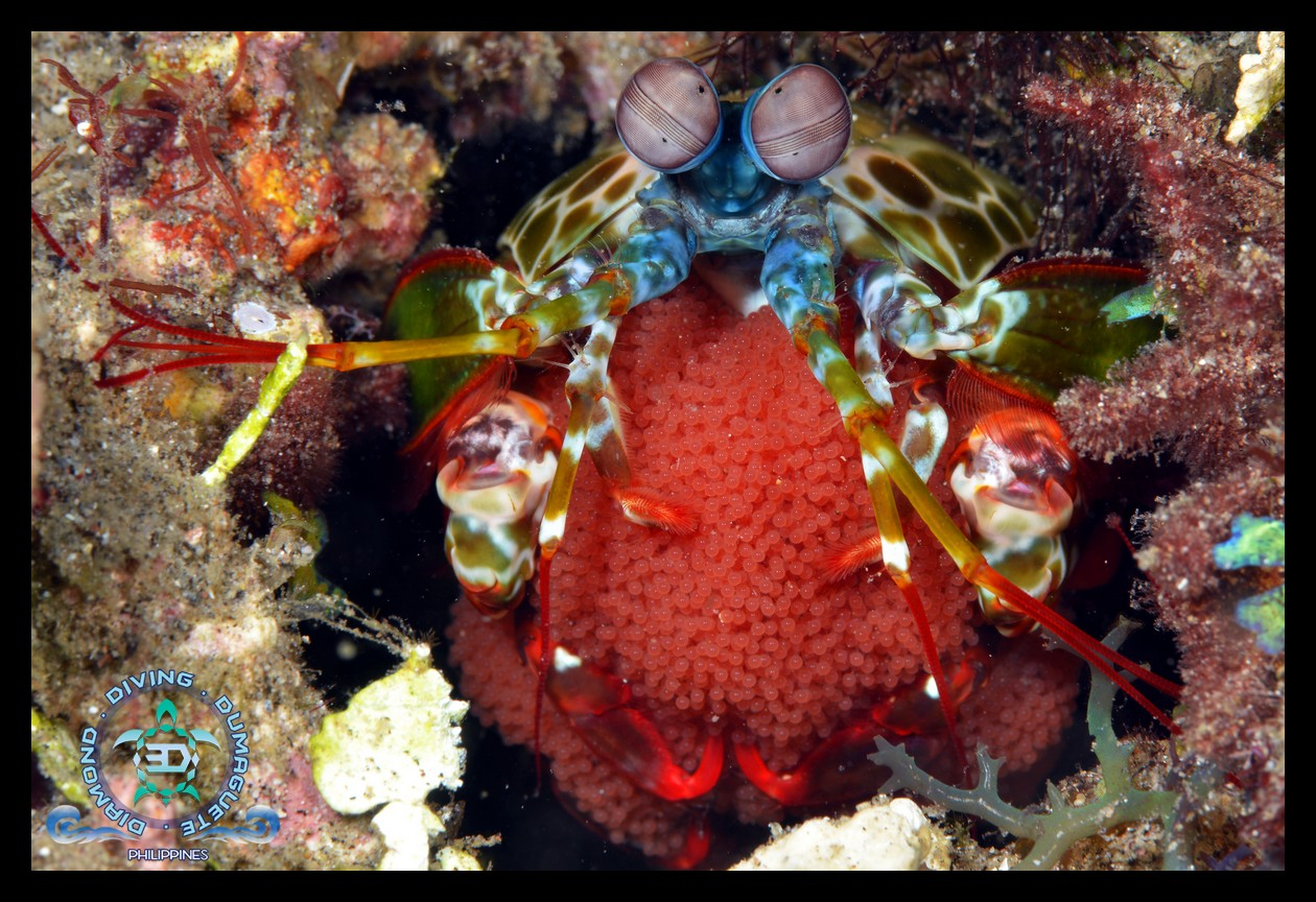 Scuba Diving, Underwater Photography