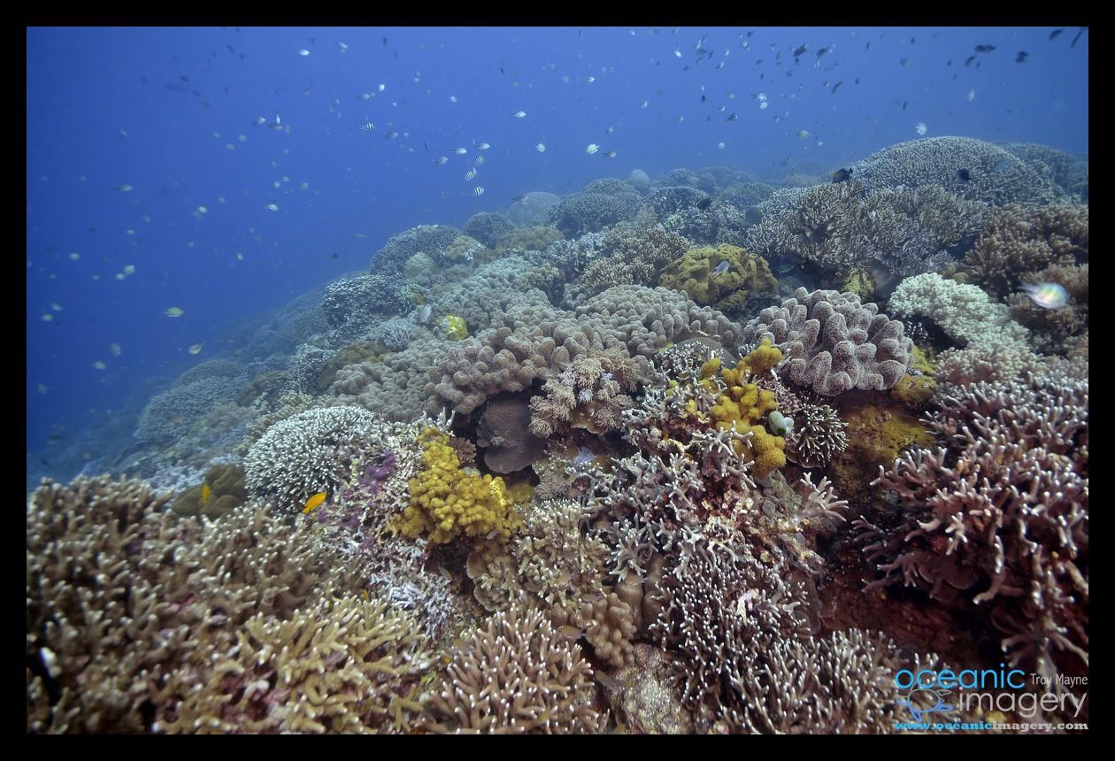 Scuba, Diving, Underwater, Photograp