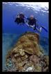 Discover Scuba at Apo Island