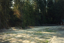 The lawn beginnings & some trees needed to go.jpg