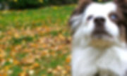 kw happy dogs, dog training, dog walks