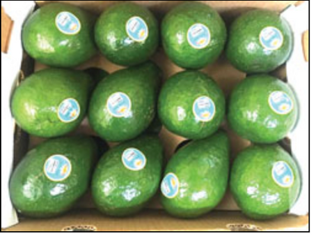 WP Produce is turning the tropical fruit industry avocado green with envy.