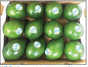12 Desbry Avocados in a case