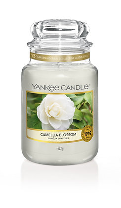 Camellia Blossom (Candela in giara grande)
