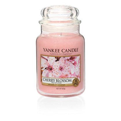 Cherry Blossom (Candela in giara grande)