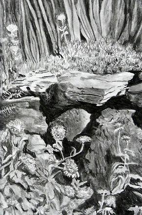 pond life a.JPG