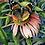 Thumbnail: Art & Garden Tour Registration