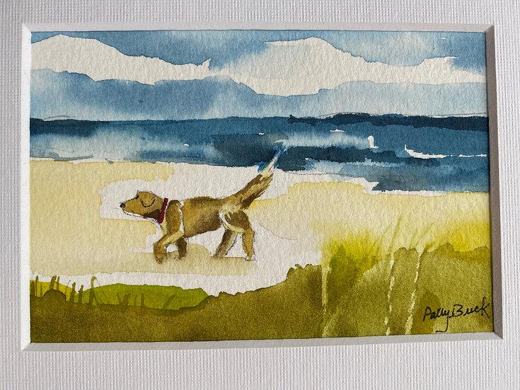 Puppy at Beach