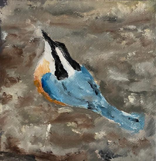 Blue Bird 27
