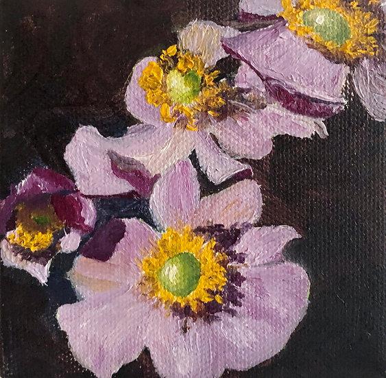 Lavender Flowers 29
