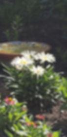 JenHerro_daisyPatch.jpg