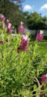 JenHerro_bumblebee.jpg