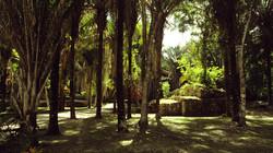Más allá del río y entre los árboles