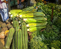 Market selling different healthy foods; cactus, nopal, hierba buena, etc.