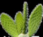 cactus gout diet
