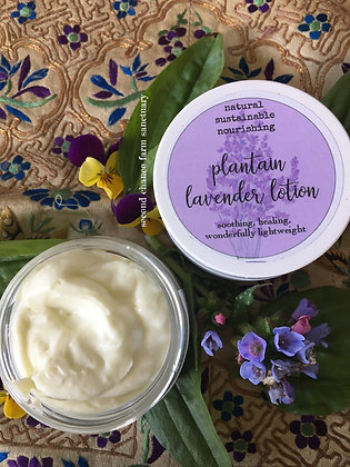 Plantain Lavender Nourishing Lotion - Infused with our own farm grown lavender a