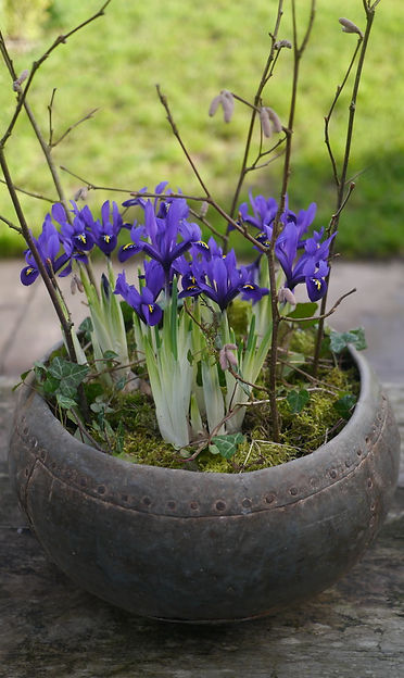 Vintage indian water pot planted with irises