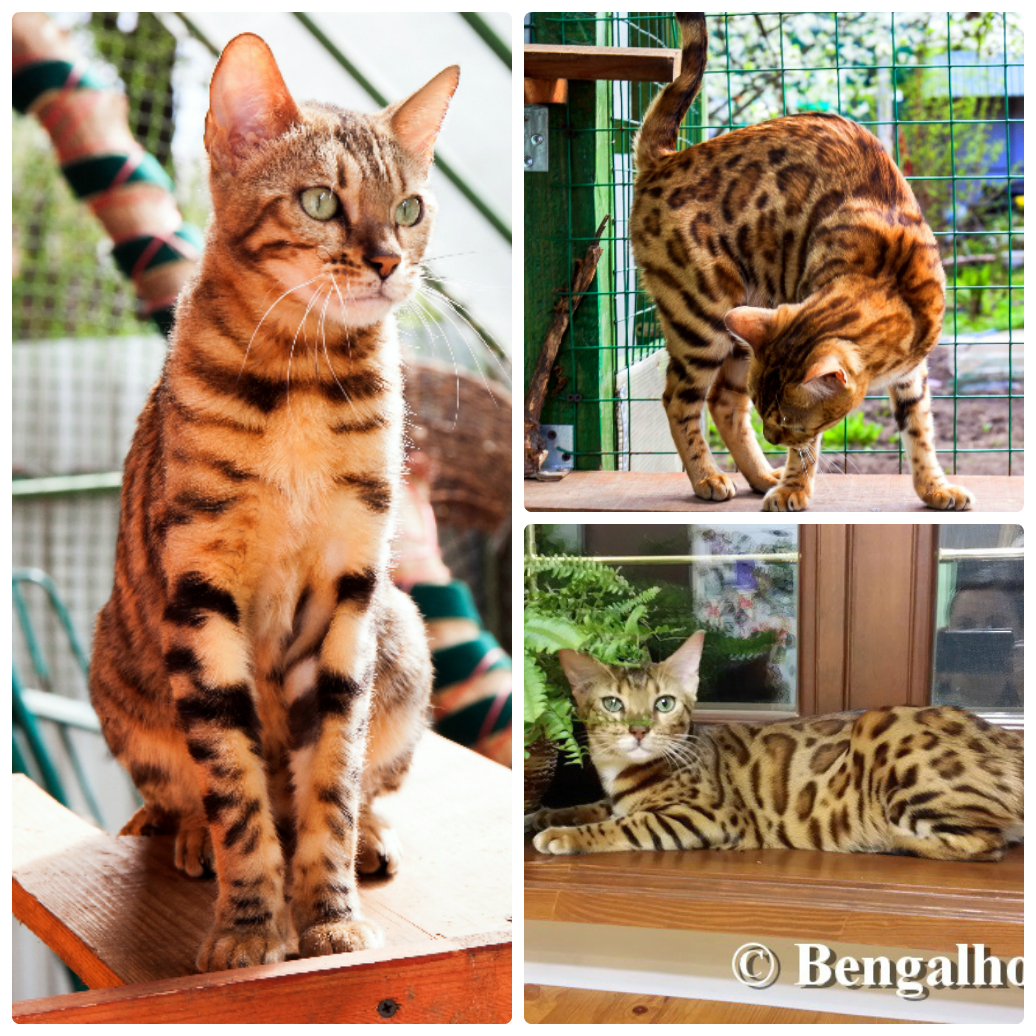 BENGAL-HOUSE