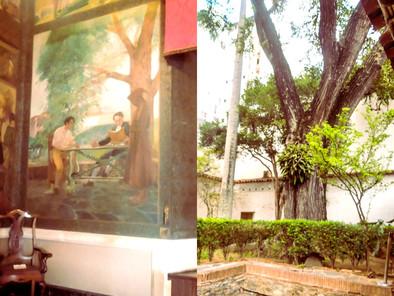 El árbol del jardín donde estudiaba El Libertador