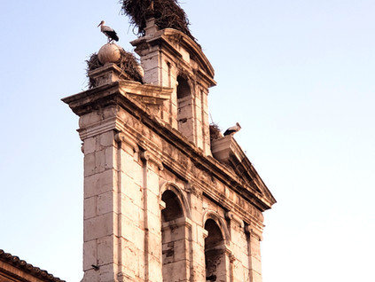 El espectáculo de las cigüeñas en Alcala de Henares