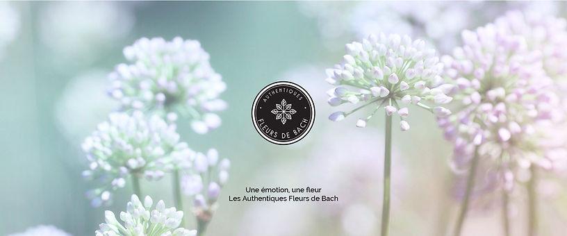 Fleurs_de_Bach.jpg