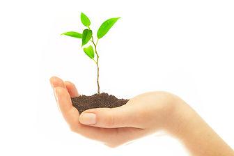 Le reiki et les plantes