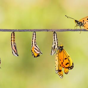 Transformieren Sie schon oder changen Sie noch?