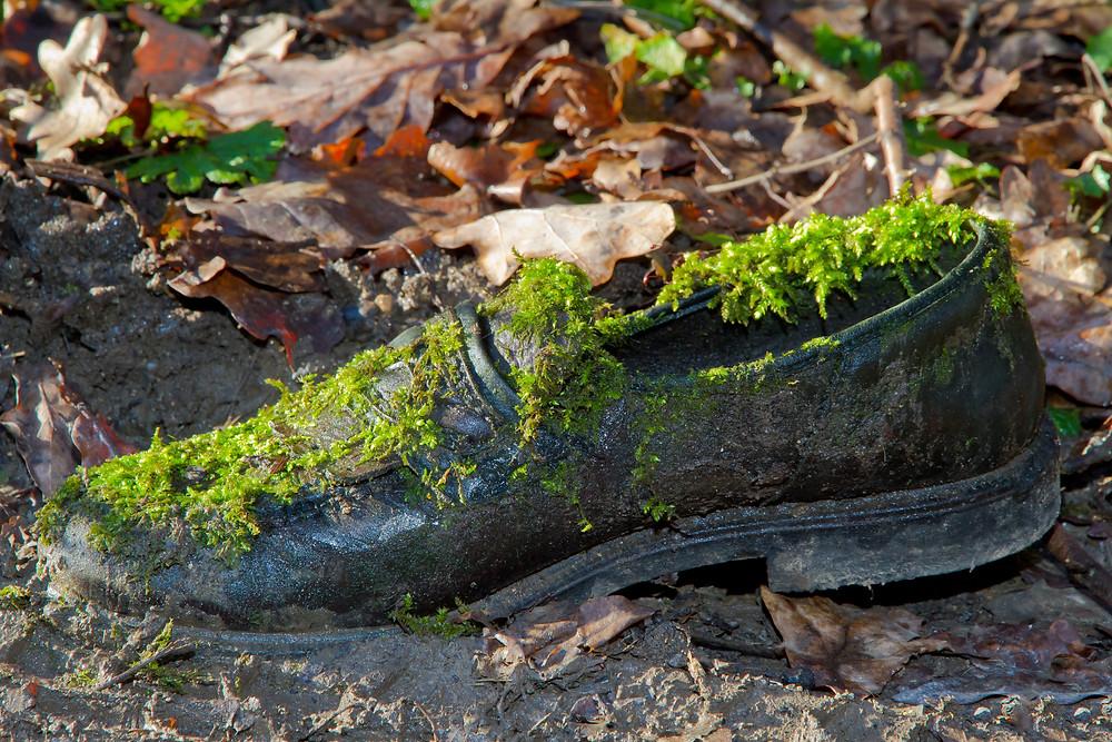 Der Artikel heißt: Der Chef stirbt im Wald: Wo führerlose Teams ihren Anfang nehmen. Das Bild zeigt einen mit grünem Moos überwachsener schwarzer Schuh auf dem Waldboden