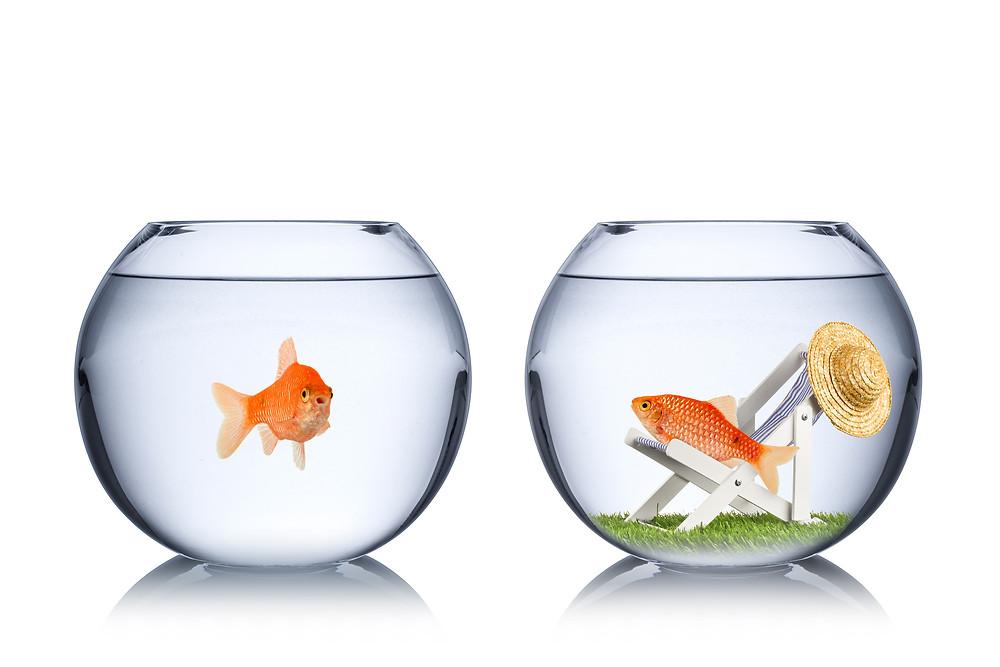Der Artikel heißt: Warum wir Egoisten auf dem Weg zu mehr Fairness begrüßen. Das Bild zeigt zwei Fische im Fischglas, wobei einer in einer Liege liegt.