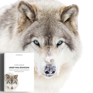 New Work unzensiert und ungeschminkt: Unser Buch ist auf dem Markt!