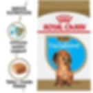 Royal Canin Dachshund Puppy.png