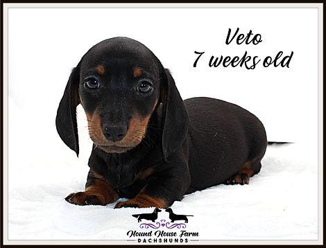 Viva's Veto 7 weeks .JPG