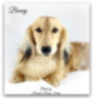 Benny 5-.jpg