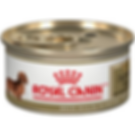 Royal Canin Dachshund Can 2.png