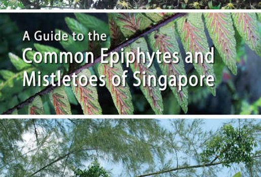A GUIDE TO EPIPHYTES AND MISTLETOES OF SINGAPORE