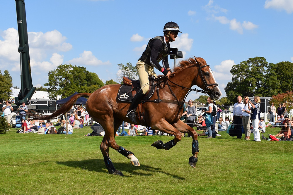 Nereo looking 17 years young with Andrew Nicholson at this year's Burghley Horse Trials