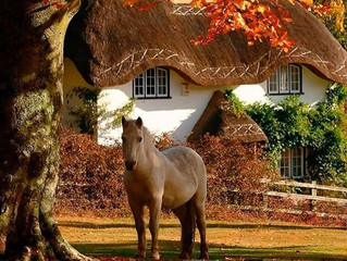5 autumn-related issues for your horse